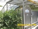 Адлер Гостевой дом «Зеленый дворик» ул. Щорса 12